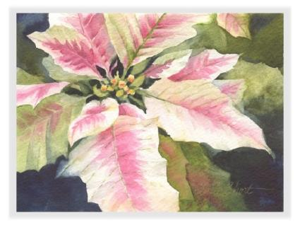 Poinsettia watercolor greeting cards susie shorts gift gallery m4hsunfo
