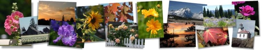 Photography Greeting Cards and Note Cards by Susie Short